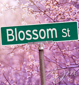 blog-2014-3-13-blossom-street-sign